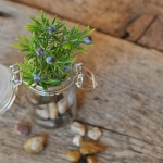 herbal magic for wiccans