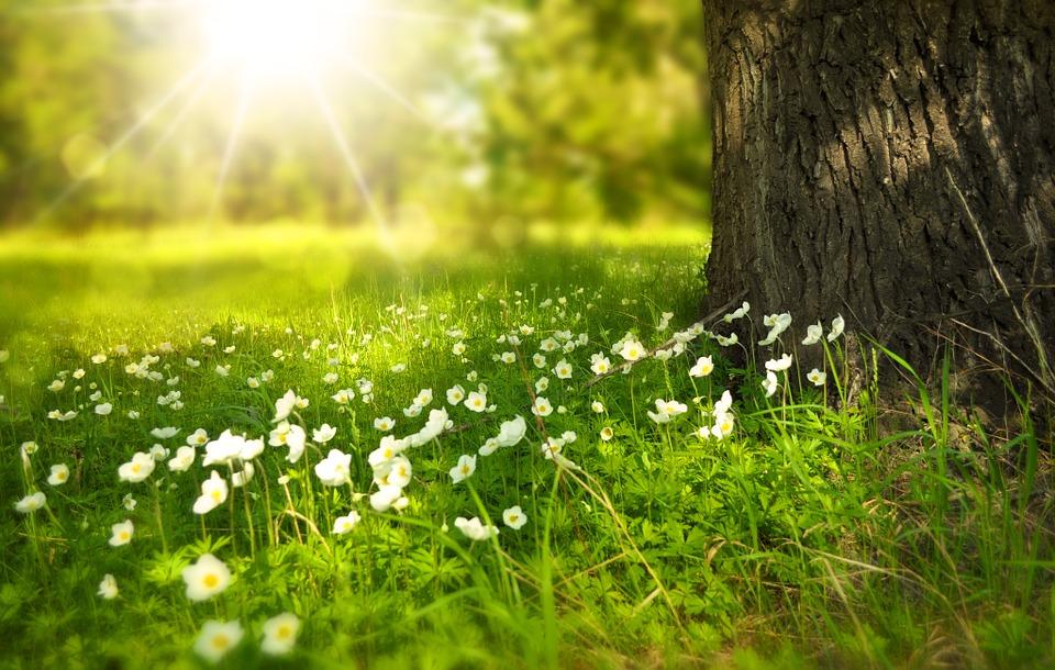 ostara spring flowers