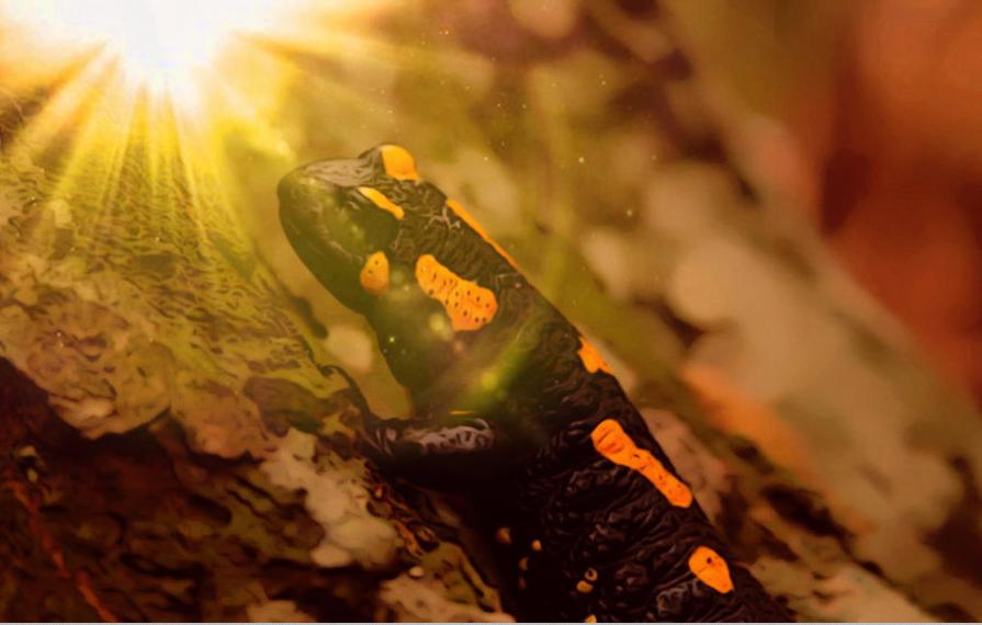 salamander - fire elemental