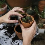 garden spell healthy soil